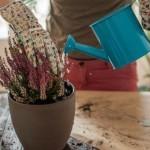 Комнатные растения. Удобрение