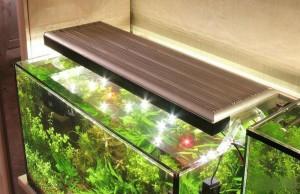svetodiodnye-svetilniki-dlya-akvariuma-osobennosti-vybor-i-primenenie