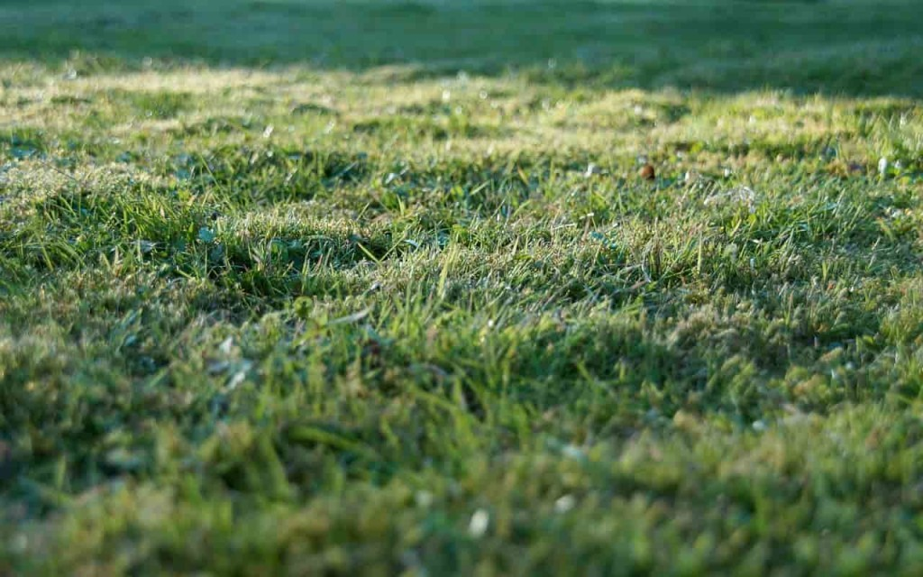 Трава на садовом участке